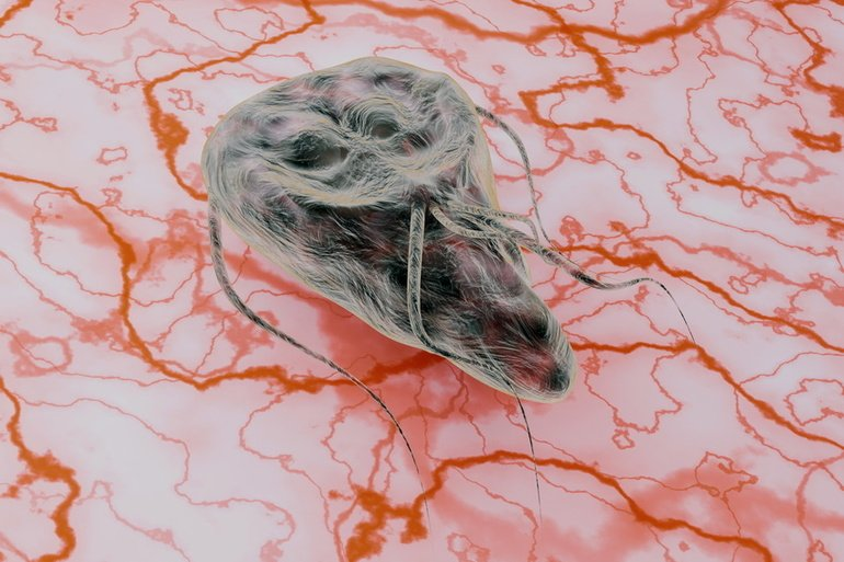 Giardien – hartnäckige Darmparasiten
