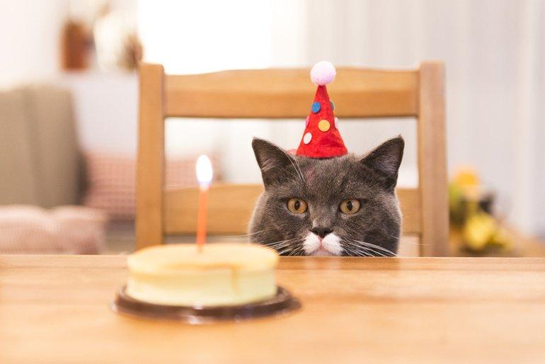 Humor Geburtstag Karte Glitzersteine Grusskarte Katzen 17x12cm