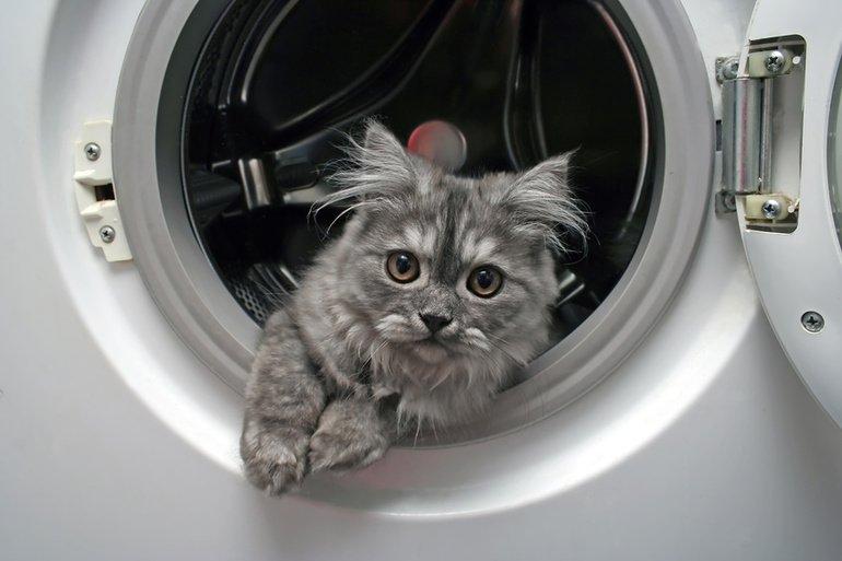 Gefahren für die Katze im Haushalt