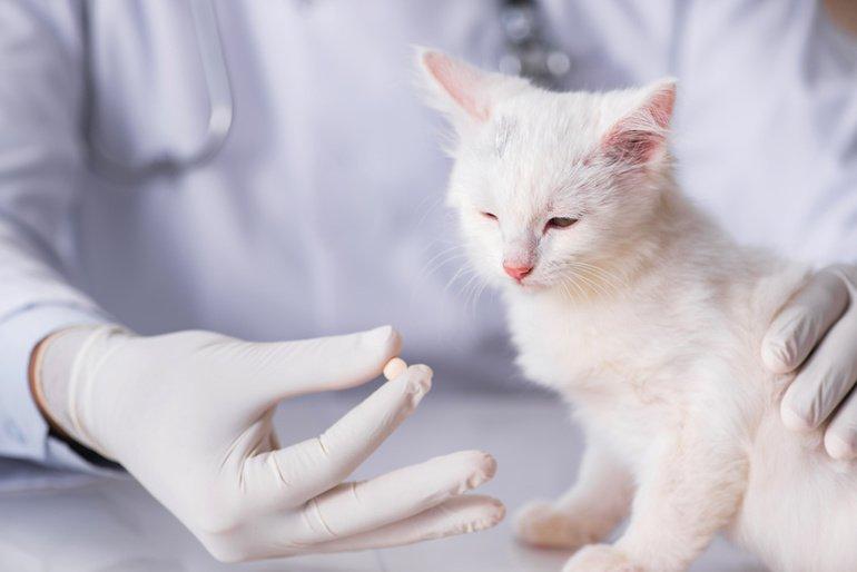 Wurmkur Katze – endlich Parasiten frei!