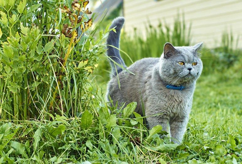 """Markieren: Eine """"duftende"""" Form der Katzensprache"""